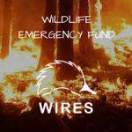wildfire-emergency-fund